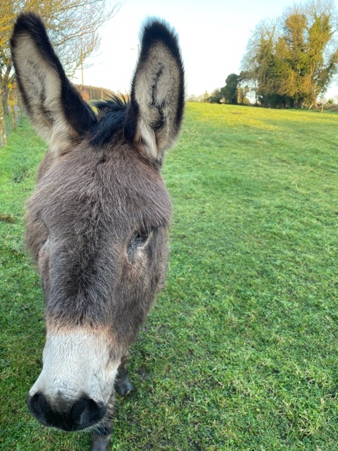 Close up of our donkey friend